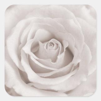 Vintage Sepia White & Cream Rose Background Custom Square Sticker