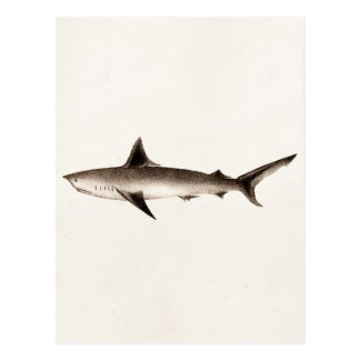 Vintage Shark Illustration - Retro Sharks Template Postcard