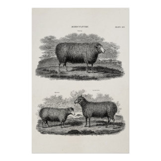 Vintage Sheep Ewe Farm Animals Retro Ewes Poster
