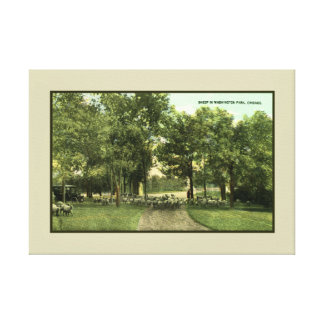 Vintage Sheep in Washington Park Chicago Stretched Canvas Prints