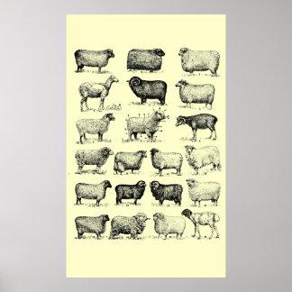 Vintage Sheep Poster