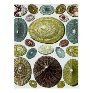 Vintage Shells Postcard