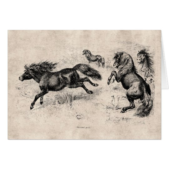 Vintage Shetland Ponies - 1800's Horse and Pony Card