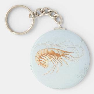 Vintage Shrimp Anatomy, Marine Life Ocean Animals Basic Round Button Key Ring
