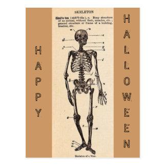 """Vintage """"Skeleton"""" Definition Postcard"""
