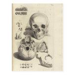 Vintage Skulls Postcard