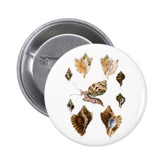 Vintage Snails and Mollusks, Marine Life Organisms 6 Cm Round Badge