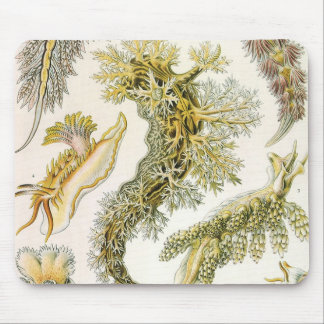Vintage Snails and Sea Slugs by Ernst Haeckel Mouse Pad