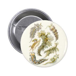 Vintage Snails and Sea Slugs, Marine Life Animals 6 Cm Round Badge