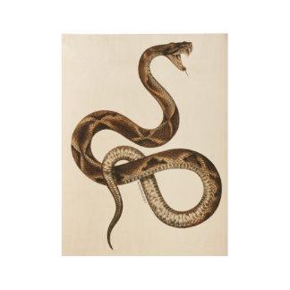 Vintage Snake Illustration Fangs Wood Poster