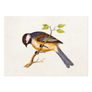 Vintage Song Bird Illustration -1800's Birds Business Card Templates