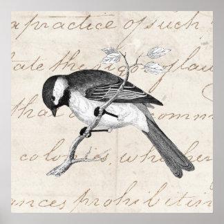 Vintage Song Bird Illustration -1800's Birds Text Poster