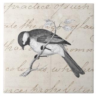 Vintage Song Bird Illustration -1800's Birds Text Tile