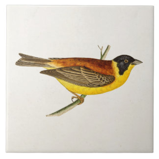Vintage Song Bird Illustration - 1800's Birds Tile