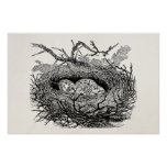 Vintage Speckled Eggs Bird Nest Personalised Birds Poster