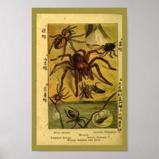 Vintage Spiders Tarantula Natural History Print