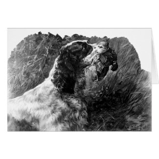 Vintage Springer Spaniel art Card