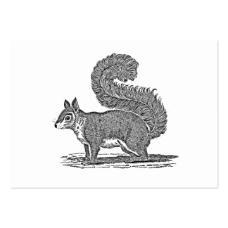 Vintage Squirrel Illustration -1800's Squirrels Business Card