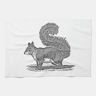 Vintage Squirrel Illustration -1800's Squirrels Tea Towel