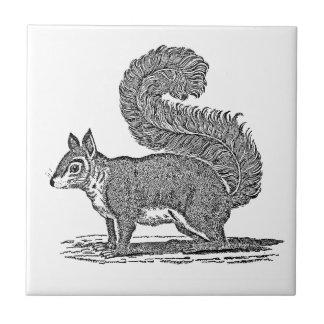 Vintage Squirrel Illustration -1800's Squirrels Tile