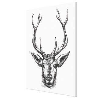 Vintage Stag, Buck, Elk, Deer Head with Antlers Canvas Print