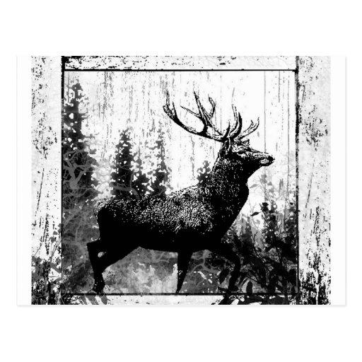 Vintage Stag Deer Black White Animal Postcard
