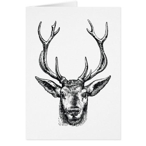 Vintage Stag or Deer Head with Antlers Greeting Card
