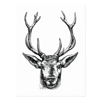 Vintage Stag or Deer Head with Antlers Postcard