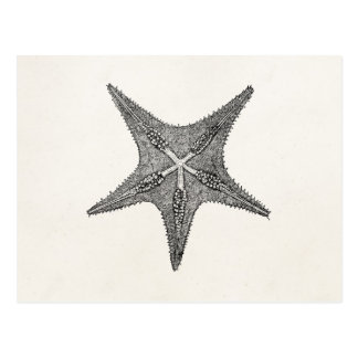 Vintage Starfish Antique Star Fish Template Postcard
