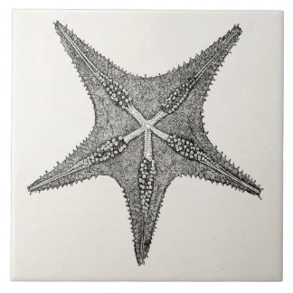 Vintage Starfish Antique Star Fish Template Tile