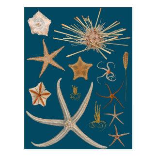 Vintage Starfish Postcard