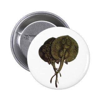 Vintage Stingrays Sting Rays, Marine Life Animals 6 Cm Round Badge