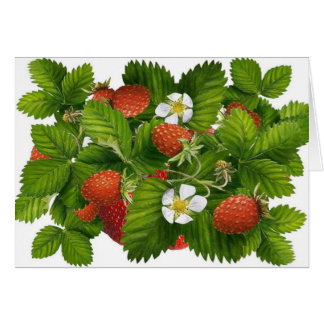 Vintage Strawberry Plant Greeting Card