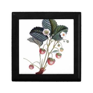 Vintage Strawberry Plant Illustration Gift Box