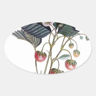 Vintage Strawberry Plant Illustration Oval Sticker
