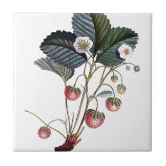 Vintage Strawberry Plant Illustration Small Square Tile