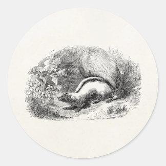 Vintage Striped Skunk 1800s Skunks Illustration Classic Round Sticker
