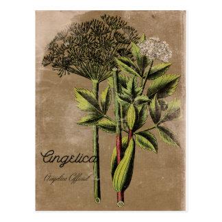 Vintage Style Angelica Plant Postcard