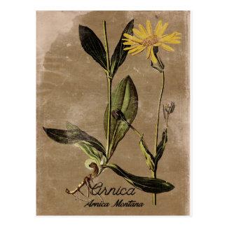 Vintage Style Arnica Flower Postcard