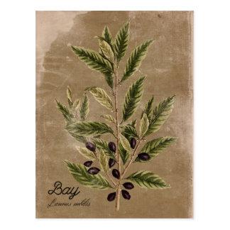 Vintage Style Bay Herb Postcard
