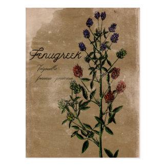 Vintage Style Fenugreek Herb Postcard