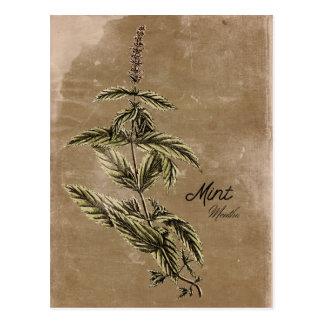 Vintage Style Mint Herb Postcard