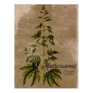 Vintage Style Motherwort Herb Postcard