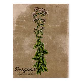 Vintage Style Oregano Postcard
