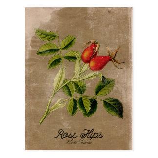 Vintage Style Rosehips Postcard