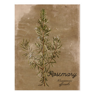 Vintage Style Rosemary Herb Postcard