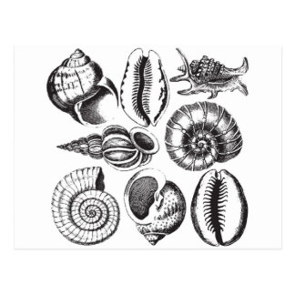 Vintage style seashells black and white postcard
