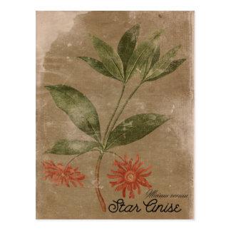 Vintage Style Star Anis Herb Postcard