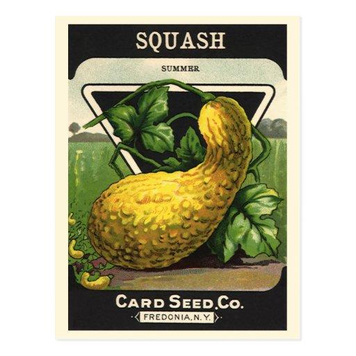 Vintage Summer Squash Seed Packet Label Art Postcard