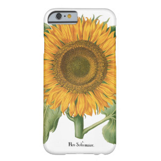 Vintage Sunflower Flower by Basilius Besler Barely There iPhone 6 Case
